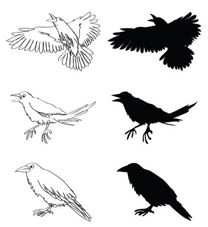 doodle und Silhouetten Abbildungen von Krähen Vektorgrafik