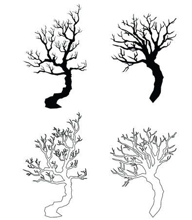 silhouettes of old trees, branches without leaves