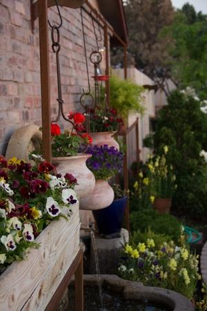 sedona: flowers in sedona