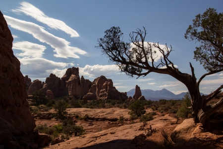 tree in arches national park Фото со стока