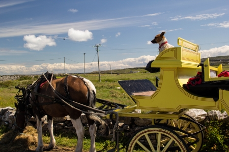 dog atop carriage in Ireland