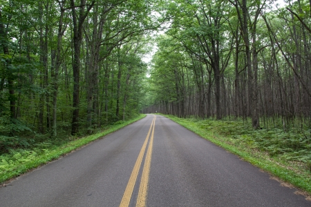 forested road in Allegheny national forest Pennsylvania