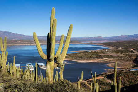 saguaro cactus over lake roosevelt Фото со стока