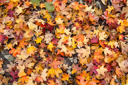 colorful fall leaves on the ground in Pennsylvania