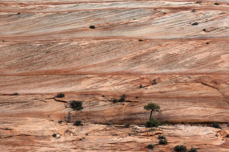 Navajo sandstone layers and cross beds, Zion National Park, Utah