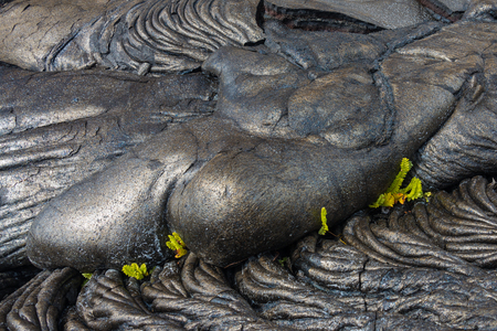 Ferns growing from recently formed basalt flow, Hawaii Volcanoes National Park