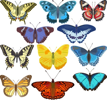 color butterfly: colorful butterflies