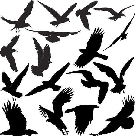 flying birds: silhouette of a raven hawk eagle gulls crow