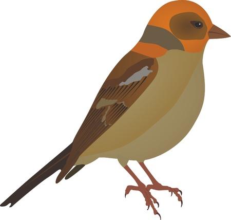 bird watching: isolated little bird