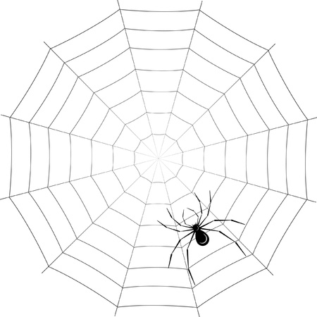 spider on web Stock Vector - 12326657