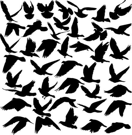 palomas volando: un conjunto de siluetas de la ilustraci�n de palomas Vectores