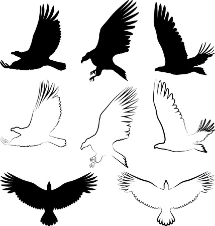 avian: silhouette of hawk and eagle