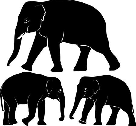 indian elephant: Elefante indio - conjunto de ilustraci�n