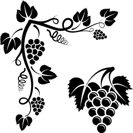bunch of vine and corner with grapevine Vector