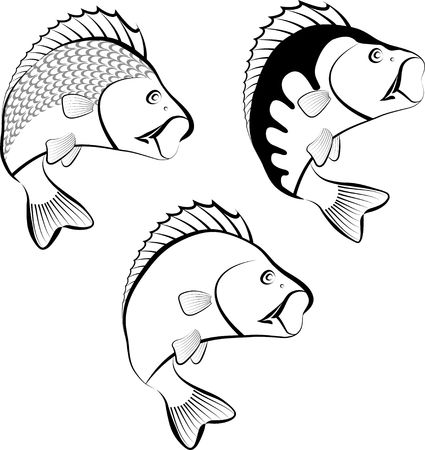 Illustration of perch fish. Stok Fotoğraf - 88110543