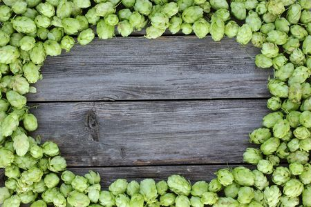 common hop: frame with hop cones