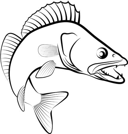 Zander fish - clip art illustration. Ilustracja