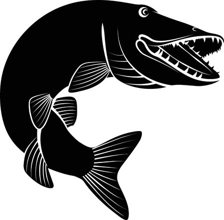 파이크 물고기 - 흰색 배경에 클립 아트 그림.