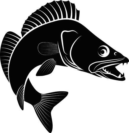 Zander 물고기 그림 클립 아트 그림입니다. 스톡 콘텐츠 - 92594169