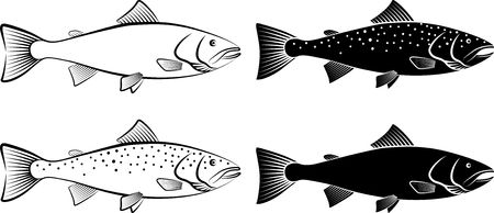 salmon - clip art illustration