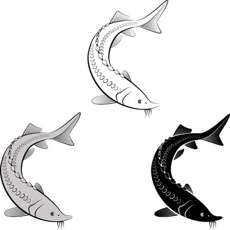 isolated sturgeon - clip art illustration and  silhouette Vettoriali