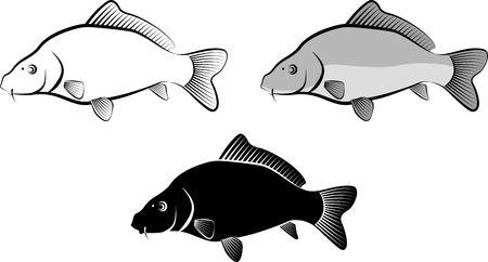 isolated carp fish  clip art illustration and line art Illustration
