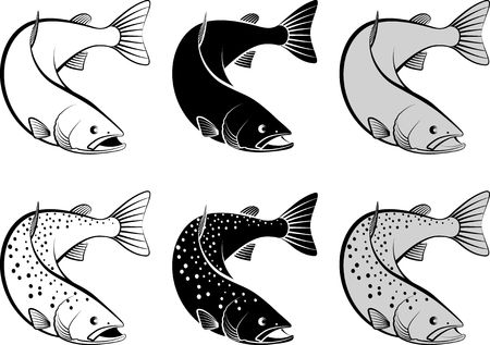 salmon - monochrome and line art illustration Illustration
