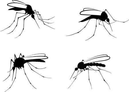 Silhouettes mosquito - vector illustration  Illustration