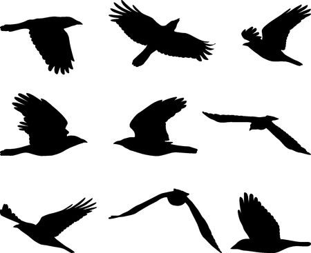 flying crow, set of birds silhouettes