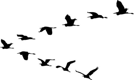 isolated flight formation of birds Ilustração
