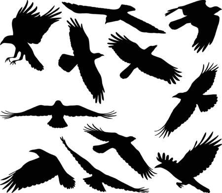 Silhouettes de corbeau volant