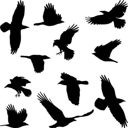 Set of silhouettes of flying crow
