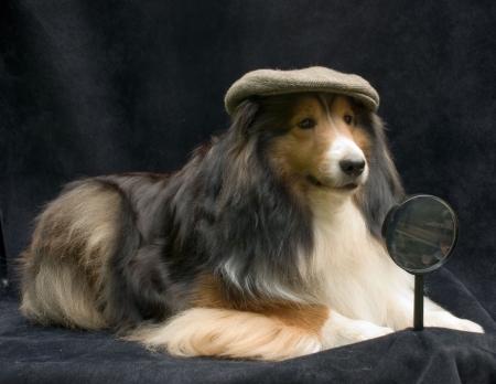pet detective Stock Photo - 3633217