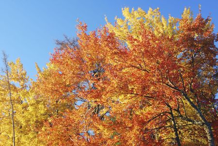 Brightly colored autumn leaves against a blue sky background.