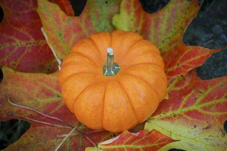Single gourd on colorful fall leaf Archivio Fotografico