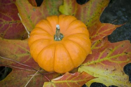 Gourd on colorful leaf