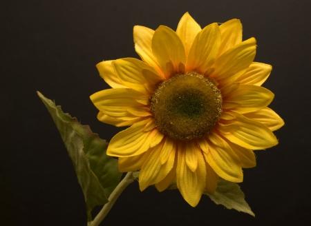 Artificial sunflower on black background Archivio Fotografico