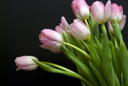 bunch of tulips against a black background with limited dof.