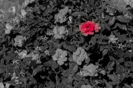 red flower background.