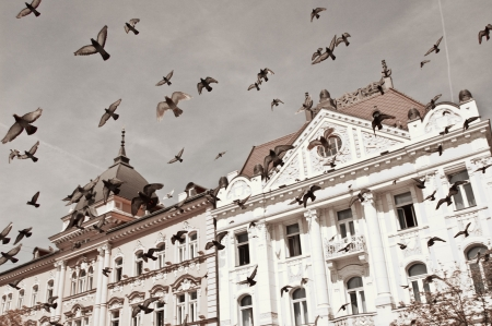 doves are flying in front of a really old building