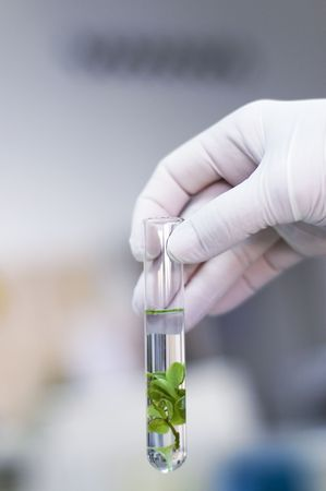 Hand in glove holding a test tube with plant  Stock Photo