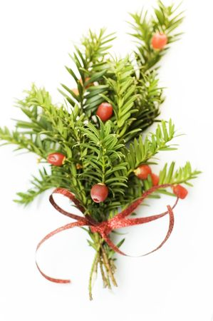 pine sprig with red ribbon
