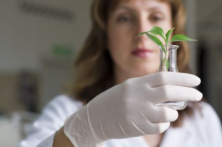 scientist holding plant in test tube