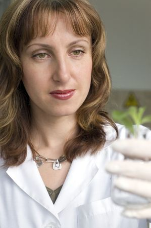 rubber plant: scientist holding plant in test tube