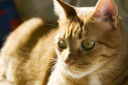 yielding: Lovely cat relaxing on the sun shine