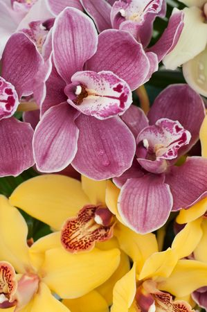 blooming orchids Stock Photo - 4748582