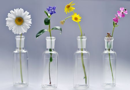 four spring flower in vases