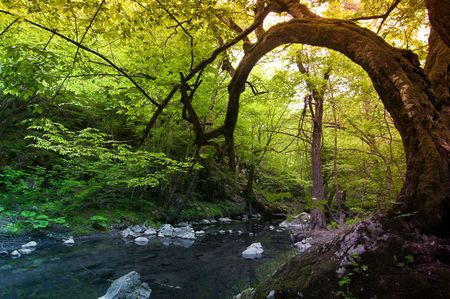 Green forest by a river in Bulgaria