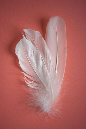 weightless:   plumas de blanco sobre fondo de color rosado Foto de archivo