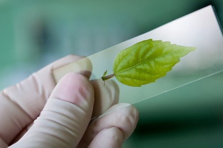 scientist observed green leaf in laboratory glass